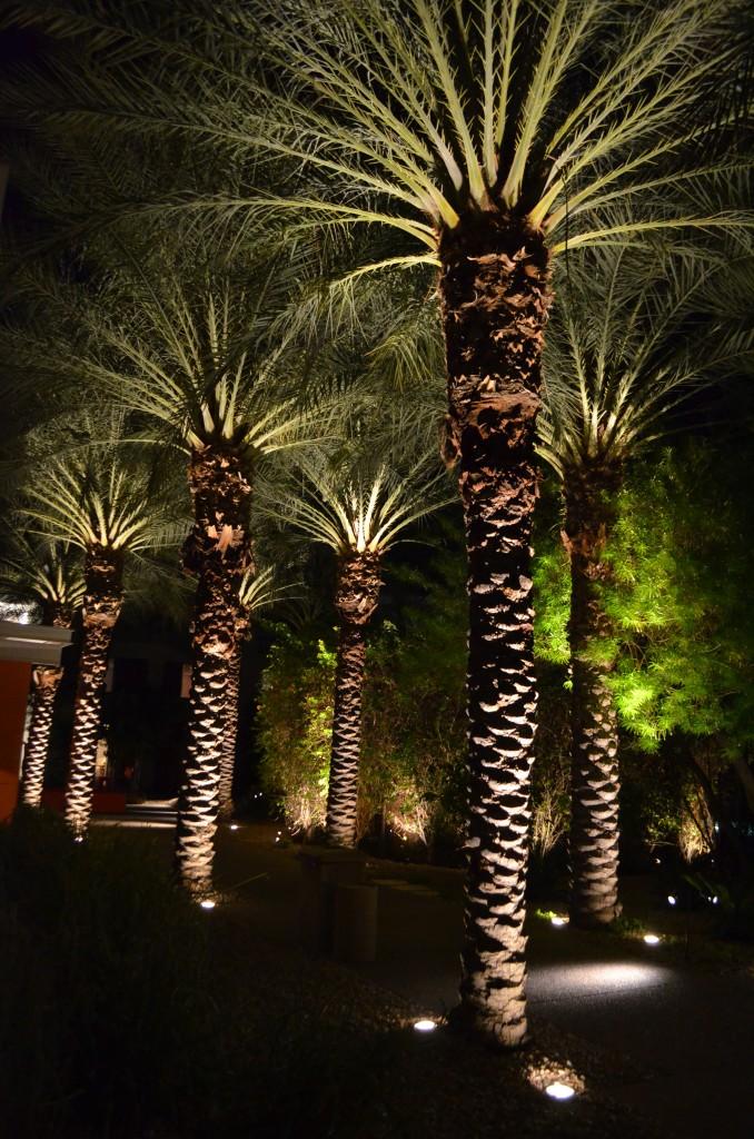 The Saguaro_Scottsdale AZ_112811_63